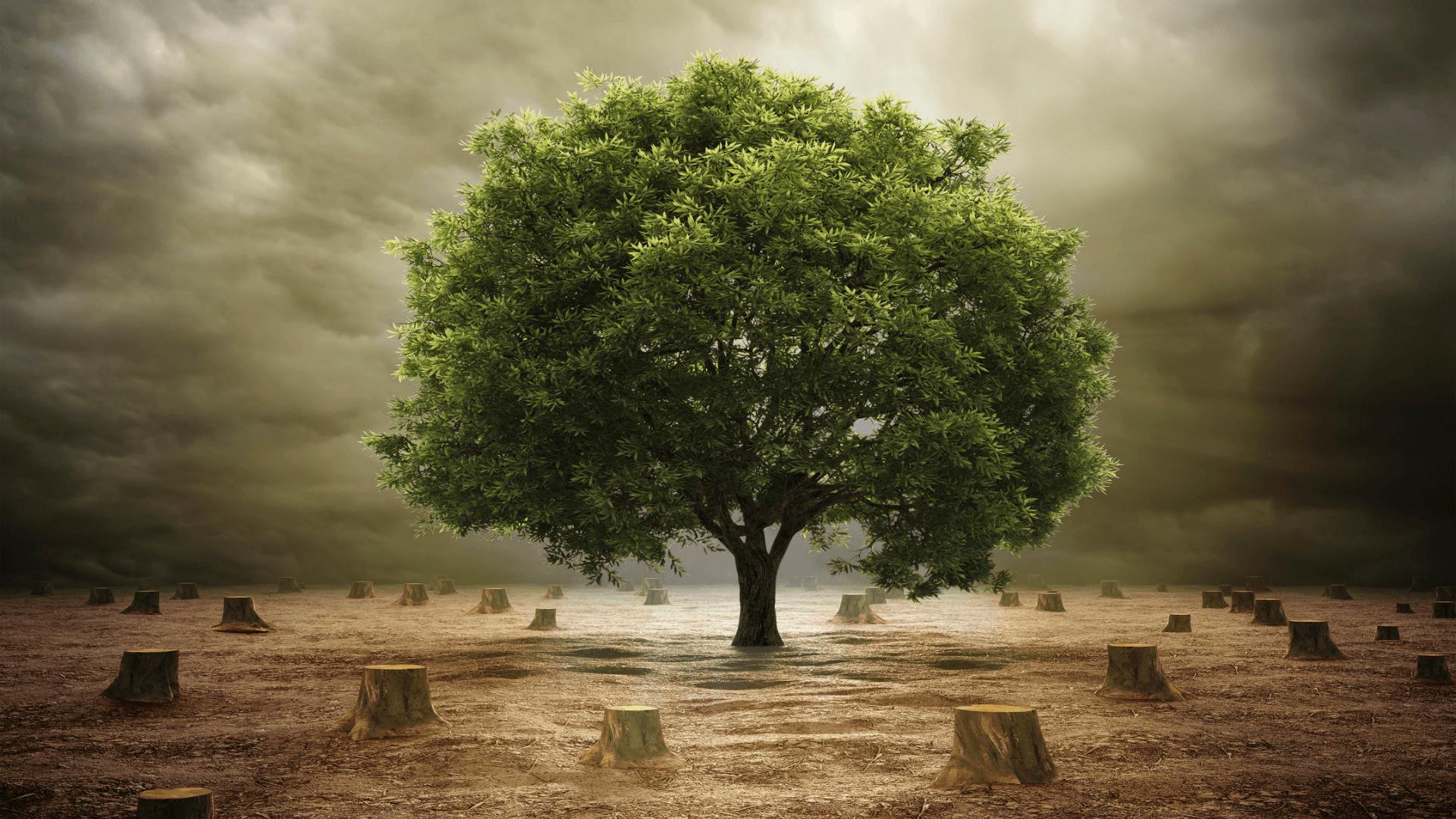 La deforestazione